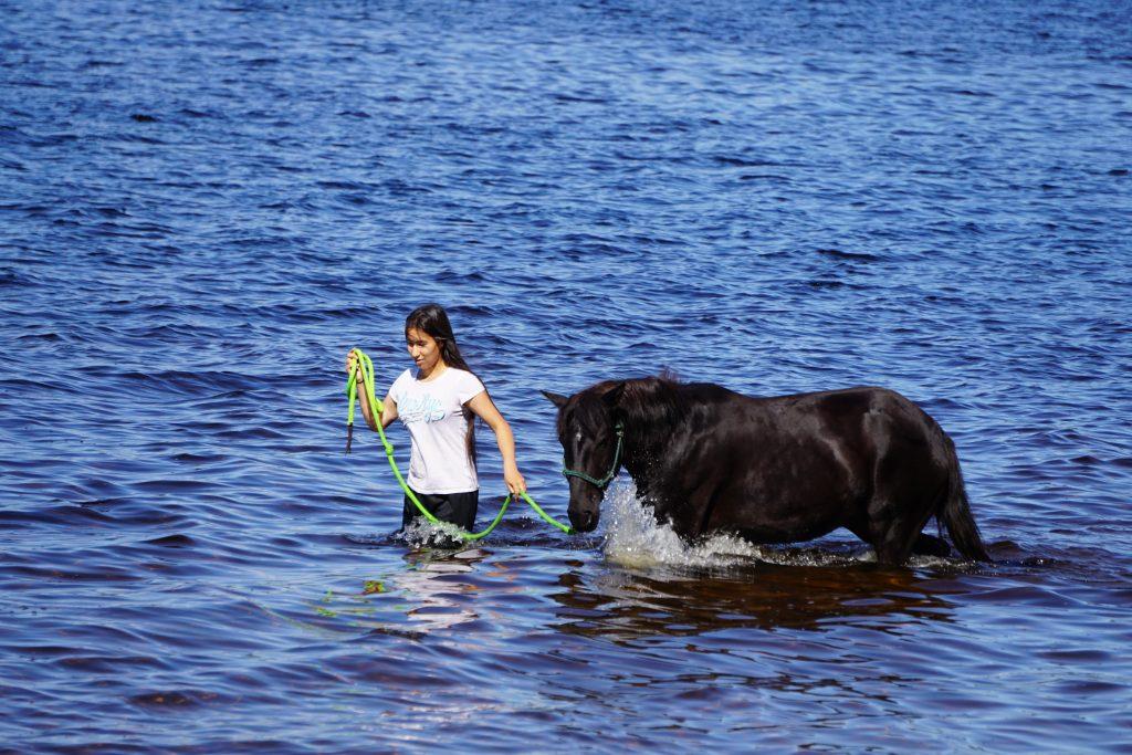 Ojibwe horses